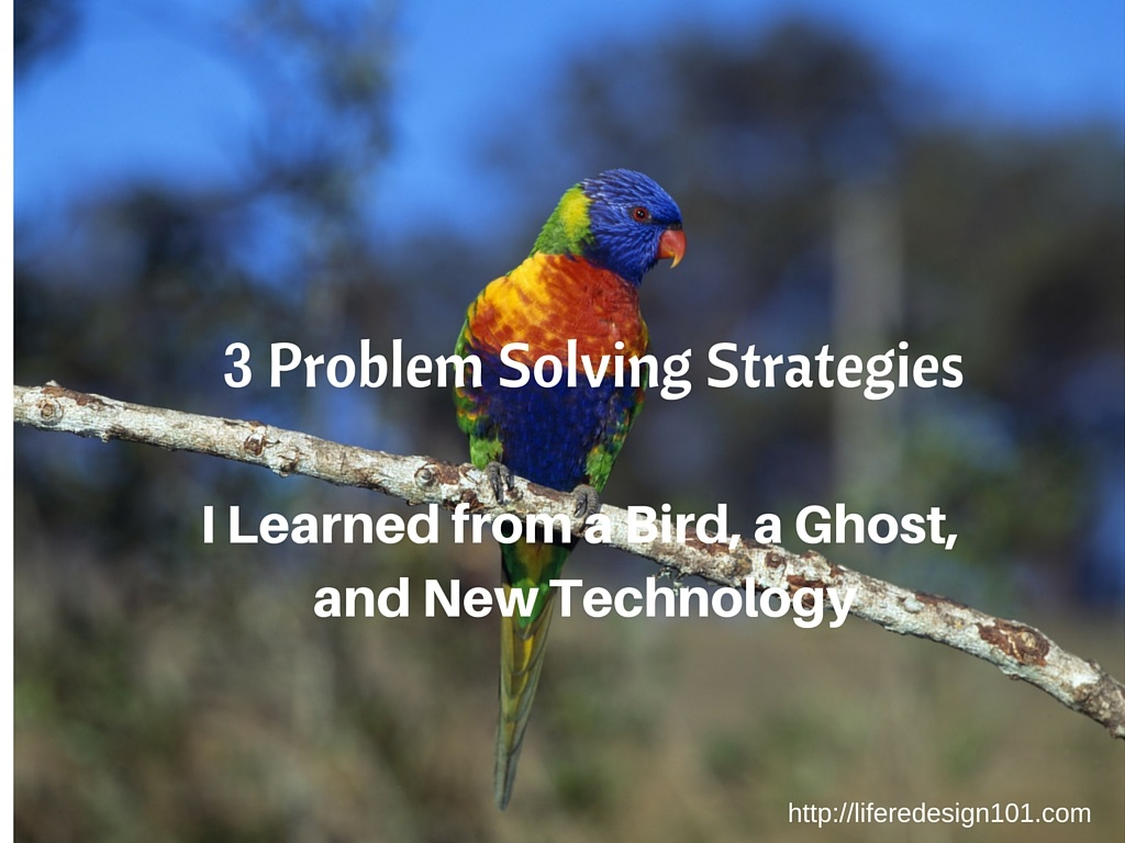 Bird Problem Solving